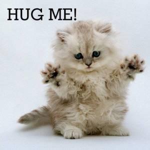 Needy kitty.