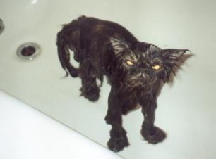 pissed-off-cat